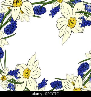 Flower background of daffodils and mouse hyacinth on a white background - Stock Photo