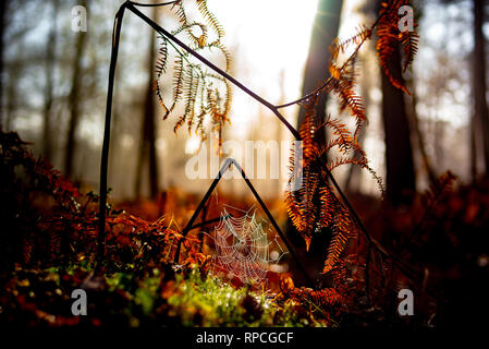Beautiful misty colourful Autumnal scene of ferns in the NewForest with a connected spider web covered in dew with the sun breaking in the background. - Stock Photo