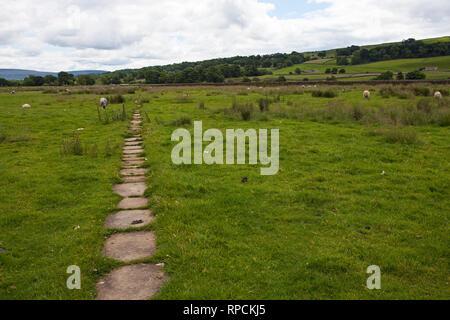 Footpath across Askrigg Bottoms Meadow Askrigg Wensleydale Yorkshire Dales National Park Yorkshire England UK July 2016 - Stock Photo