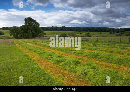Hay meadow partially cut Askrigg Bottoms Meadow Askrigg Wensleydale Yorkshire Dales National Park Yorkshire England UK July 2016 - Stock Photo