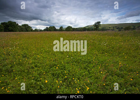 Askrigg Bottoms Meadow Askrigg Wensleydale Yorkshire Dales National Park Yorkshire England UK July 2016 - Stock Photo