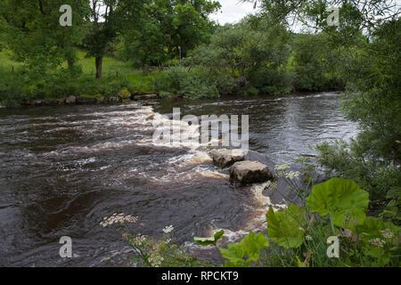 River Ure beside Askrigg Bottoms Meadow Askrigg Wensleydale Yorkshire Dales National Park Yorkshire England UK July 2016 - Stock Photo