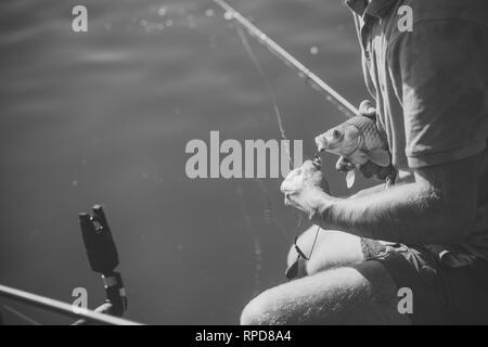 Carp, crucian carp, trout on fishhook, angling - Stock Photo