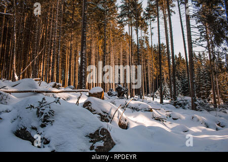 winter landscape in Harz Mountains National Park, Germany - Stock Photo