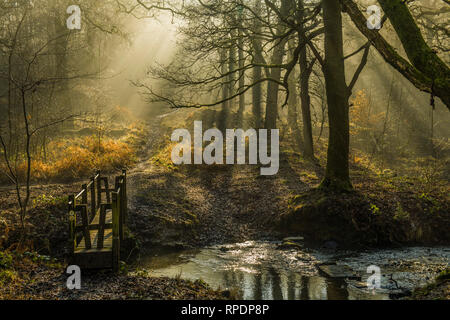 Trees, Shadows and sunbeams in the Forest of Dean Gloucestershire early on a February morning - Stock Photo