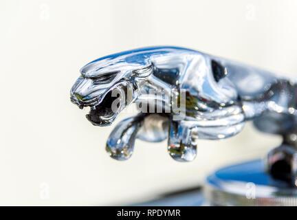 Jaguar mascot - Stock Photo