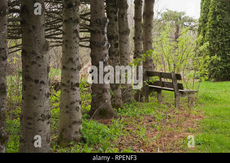 Row of pine tree trunks and an old wooden bench in the Jardin du Grand Portage garden in spring, Saint-Didace, Lanaudiere, Quebec, Canada - Stock Photo
