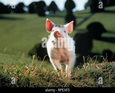 BABE, BABE, 1995 - Stock Photo