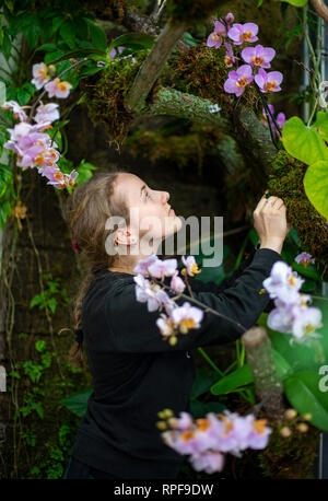 Leipzig, Germany. 21st Feb, 2019. Anna Bech works in the botanical garden on the construction of the orchid show. The show will open on 23 February. Credit: Monika Skolimowska/dpa-Zentralbild/dpa/Alamy Live News - Stock Photo