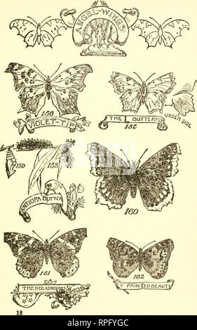 . The American boys' book of bugs, butterflies and beetles. Insects. . Please note that these images are extracted from scanned page images that may have been digitally enhanced for readability - coloration and appearance of these illustrations may not perfectly resemble the original work.. Beard, Daniel Carter, 1850-1941. Philadelphia, Lippincott - Stock Photo