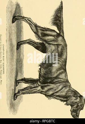 . The American book of the dog. The origin, development, special characteristics, utility, breeding, training, points of judging, diseases, and kennel management of all breeds of dogs. Dogs. . Please note that these images are extracted from scanned page images that may have been digitally enhanced for readability - coloration and appearance of these illustrations may not perfectly resemble the original work.. Shields, G. O. (George O. ), 1846-1925, ed. Chicago, Rand, McNally - Stock Photo