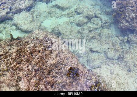 Colorful seabed shots taken at the beaches of the Seychelles island - Stock Photo