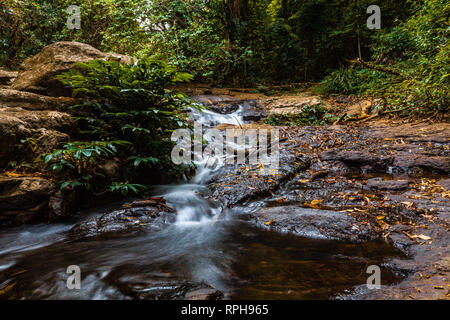 Flowing creek in lush green wild rainforest in Australia - Stock Photo