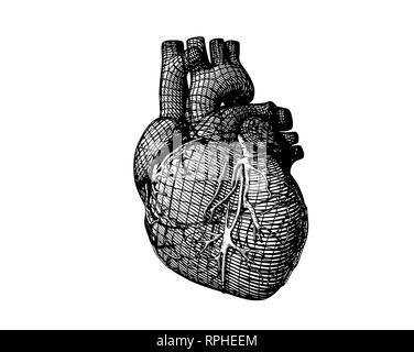 Monochrome stylized wireframe human heart isolated on white background - Stock Photo
