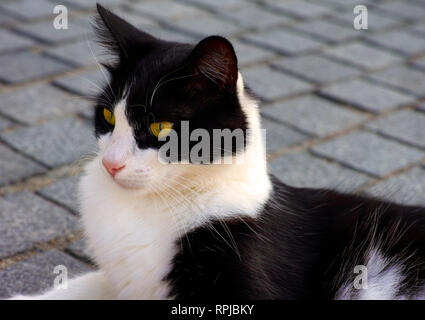 Black and white cat lying on the pavement. - Stock Photo
