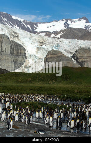 Bertrab Glacier, Gold Harbour, South Georgia - Stock Photo