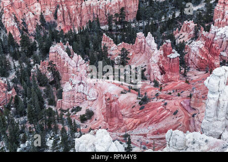 Rock Formations And Pine Trees In Bryce Canyon National Park, State Utah, USA - Stock Photo