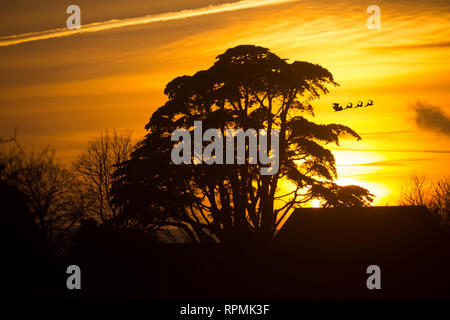 Father Christmas, on sleigh with rain deer flying off with presents. Eve, Card, Sunset, Tree, Trees, Gurnard, Isle of Wight, England, - Stock Photo
