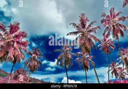 Beautiful infrared shot of palm trees on the paradise island Seychelles - Stock Photo