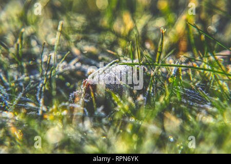 A harmony atmosphere on the garden. A morning sunrays falling down to grass and create magical light. - Stock Photo