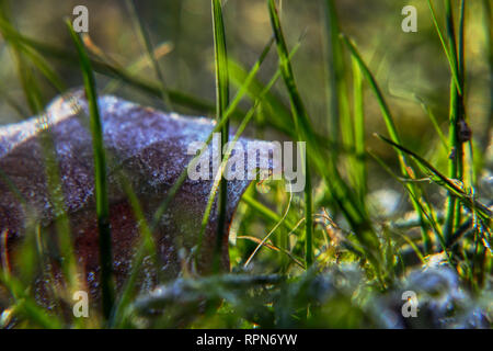 A beautiful morning light in grass. A sunrays falling down to grass and create this picture with leaf and grass. - Stock Photo