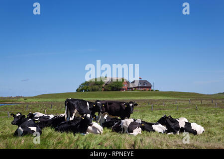 geography / travel, Germany, Schleswig-Holstein, cows ante the warft on the Hallig Langeness, German i, Additional-Rights-Clearance-Info-Not-Available - Stock Photo