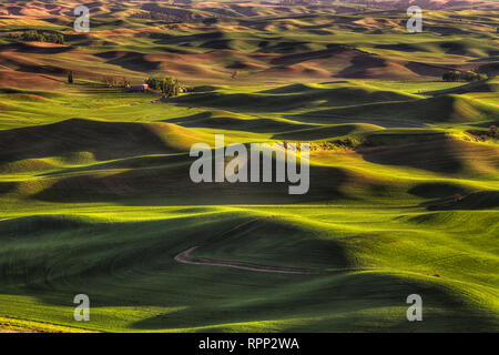 The rolling hills of the Palouse in Eastern Washington as seen from Steptoe Butte State Park. - Stock Photo