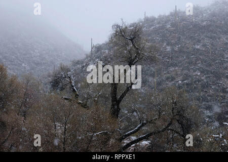 Tucson, Arizona, USA. 22nd Feb, 2019. February 22, 2019- Snowstorm at Sabino Canyon in Tucson, Arizona. A rare winter blizzard brought snow to southern Arizona. Many Tucson residents and touridts went to the National Park at Sabino Canyon to enjoy the unusual weather . Tempertures were 30 degrees colder than normal for this time of year. Credit: Christopher Brown/ZUMA Wire/Alamy Live News - Stock Photo