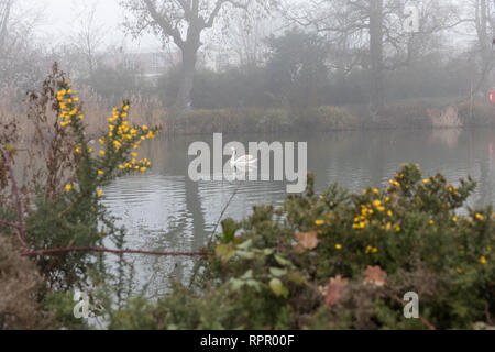 London, UK. 23rd Feb 2019. UK weather. Foggy morning in Clissold Park, Stoke Newington in north London..  Credit: carol moir/Alamy Live News - Stock Photo