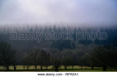 Field in foreground with mist and low cloud covering the hills of south Shropshire beyond. - Stock Photo