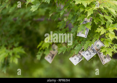 Money growing on tree, USA currency dollar, cash crop, money tree, finance concept stock, investment, passive income, inheritance, loans, saving - Stock Photo