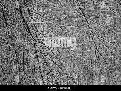 Abstract Branches - Tree Fine Art Photography - Stock Photo