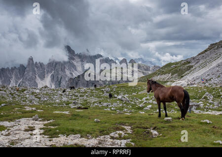 Horses grazing freely in a green meadow against the backdrop of dramatic dolomite peaks - Stock Photo