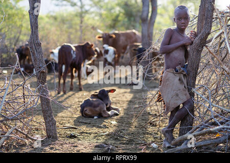 Himba boy looking after cattle, Namibia, Africa - Stock Photo