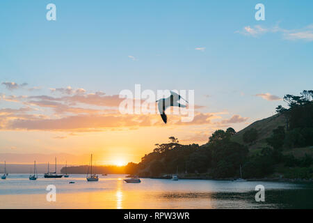 Seagull blurred in flight over scenic vista as sun sets over Pilot Bay on Tauranga Harbour with silhouette of boats and Mount Maunganui - Stock Photo