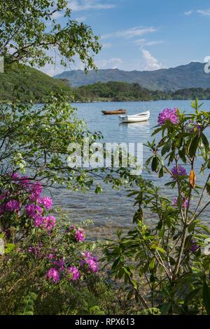 Boats on Loch Morar seen through summer flowering bushes. Morar, Highland Region, Scotland - Stock Photo