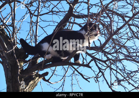 Kitten on a tree branch looks at the world. Natural background - Stock Photo