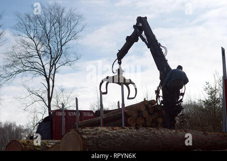 Flechtlingen, Germany. 21st Feb, 2019. Frank Gotzmann loads his truck with larch. The trees had been infested by the larch bark beetle and were cleared to counteract mass propagation of the pests. The foresters of the Landeszentrum Wald Sachsen-Anhalt attribute the damage to the coniferous forests to the drought in 2018. After the sick trees have been cleared, they are to be reforested with climate-resistant and site-suitable tree species. Credit: Klaus-Dietmar Gabbert/dpa-Zentralbild/ZB/dpa/Alamy Live News - Stock Photo