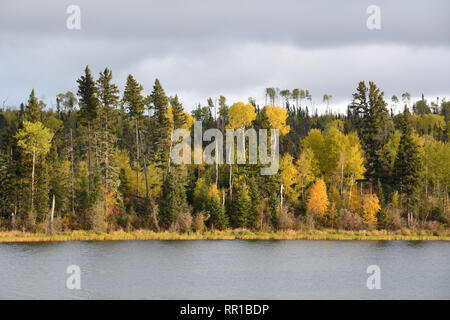 The autumn colours of the boreal forest on the shores of Otter Lake near the village of Missinipe in northern Saskatchewan, Canada. - Stock Photo