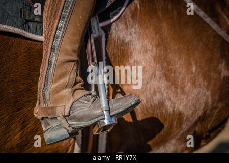 Close-up of a leather boot in a bridle brown horse - Stock Photo