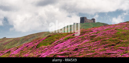 Magic pink rhododendron flowers on summer Carpathian mountains. Old Polish observatory on Pip Ivan mountain. Landscape photography - Stock Photo