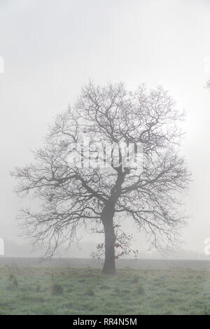Warrington, Cheshire, UK. 24th Feb, 2019. 24-02-19   The weather gave a misty morning at Grappenhall Heys near to Warrington, Cheshire, England. A sunny day had been forecast but it took a while to burn away the mist in the countryside Credit: John Hopkins/Alamy Live News - Stock Photo