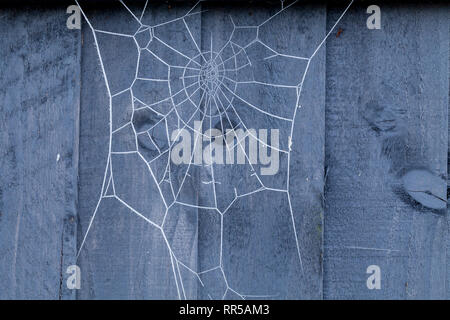 Spiders web on a blue wooden fence covered in ice crystals during winter. - Stock Photo