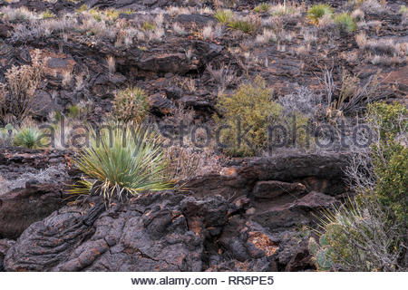 Desert Plants in Valley of Fire In New Mexico - Stock Photo