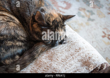 cat sleeping on a chair - Stock Photo