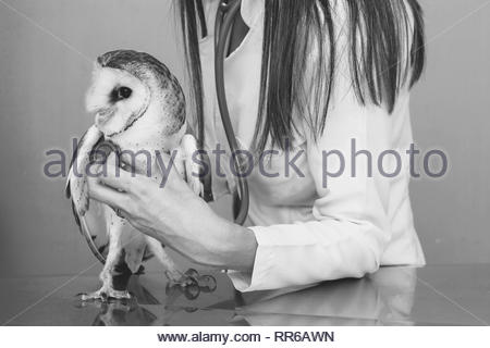 Vet examining, injured and sick owl, with stethoscope in veterinary clinic. Image of owl in recovery being taken care of by a veterinarian. - Stock Photo