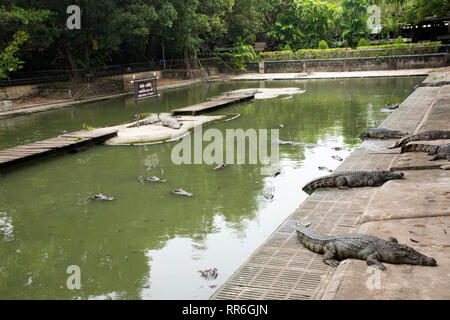 Crocodiles sleeping and resting and swimming in pool for show travelers people visit looking at the park on July 17, 2018 in Nakhon Phatom, Thailand. - Stock Photo