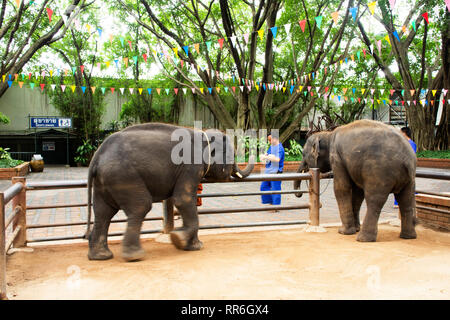 Young elephants standing and waiting travelers people visit and looking and feeding at samphran elephant ground & zoo on July 17, 2018 in Nakhon Phato - Stock Photo