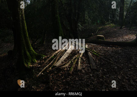 Great Lambsquay Wood, Forest of Dean - Stock Photo