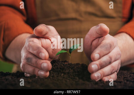 selective focus of man planting young green plant, earth day concept - Stock Photo